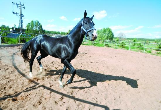 上最古老的马种之一