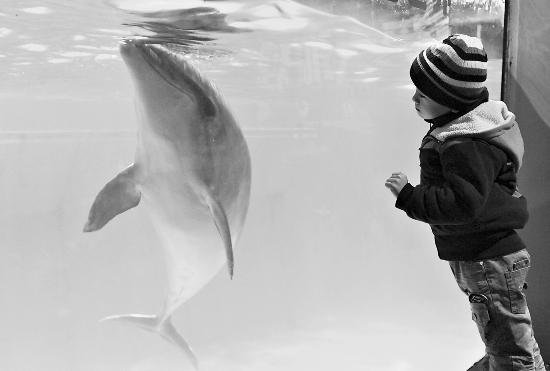 """孤独症儿童与""""海豚医生"""""""